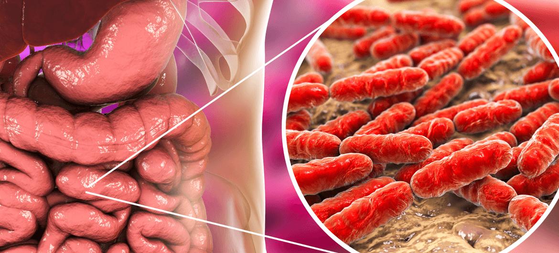 Microbiota intestinale e tiroide